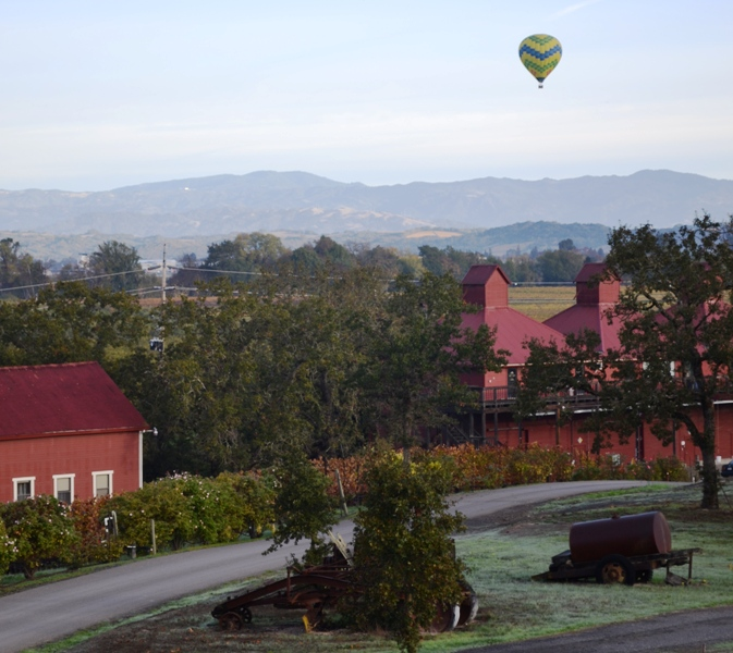 A hot air balloon rising over Martinelli Winery in Windsor, adding to the beauty of the vineyards.